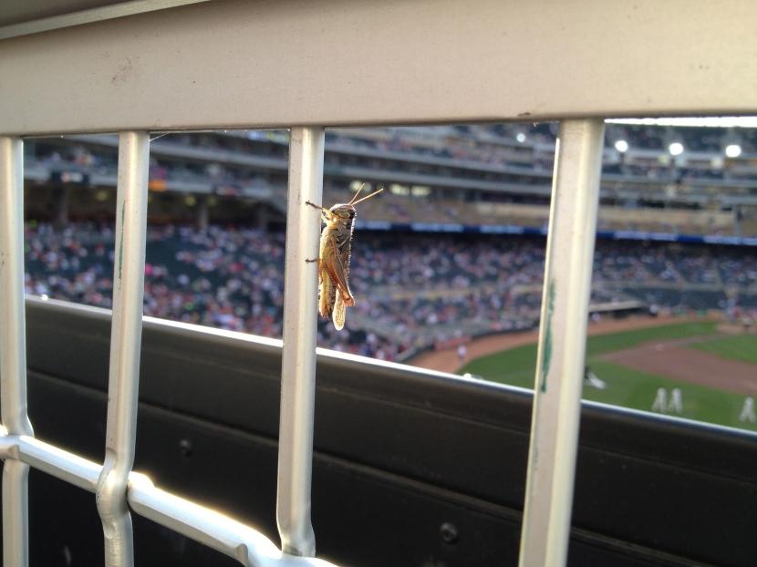 9713 Grasshopper
